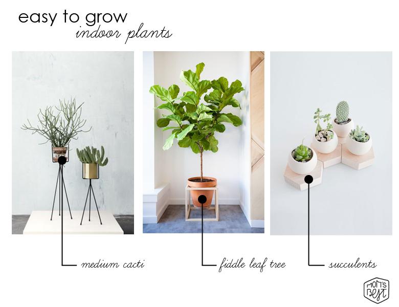 Cool Modern Design Trend Easy To Grow Indoor Plants
